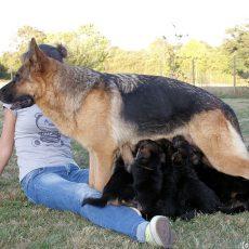Objectif : zéro chien maltraité ou abandonné