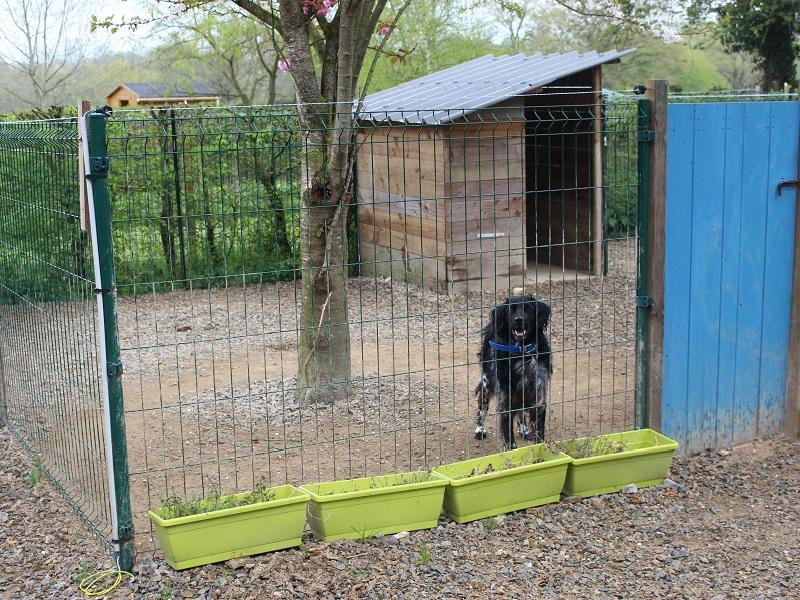 conditions de séjours des chiens
