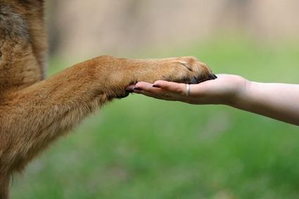 Education canine : juste milieu et humanité !