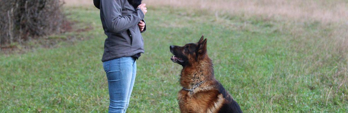 les différences entre éducation canine et dressage