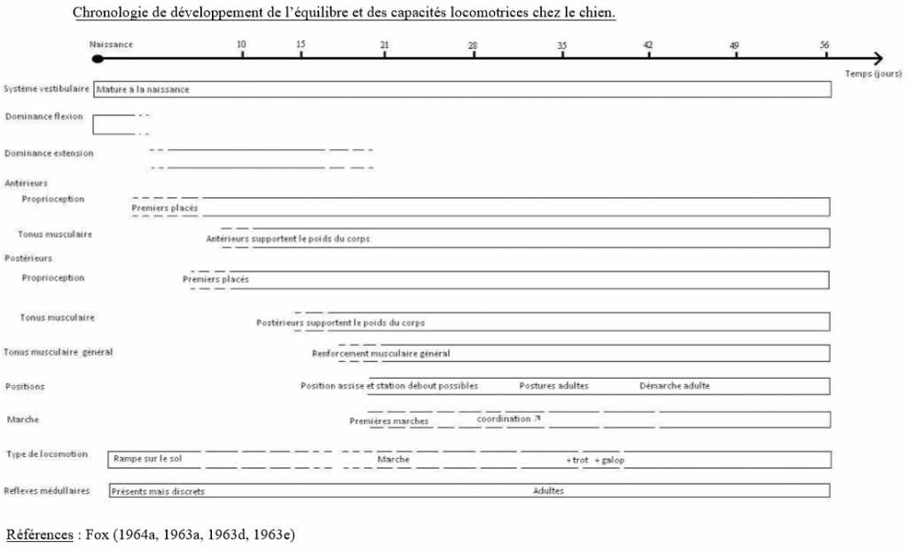 chronologie-developpement-locomoteur