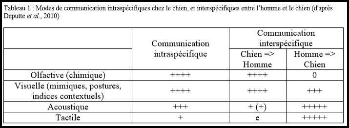 modes-communication-intra-interspecifique-chien-chien-homme-chien