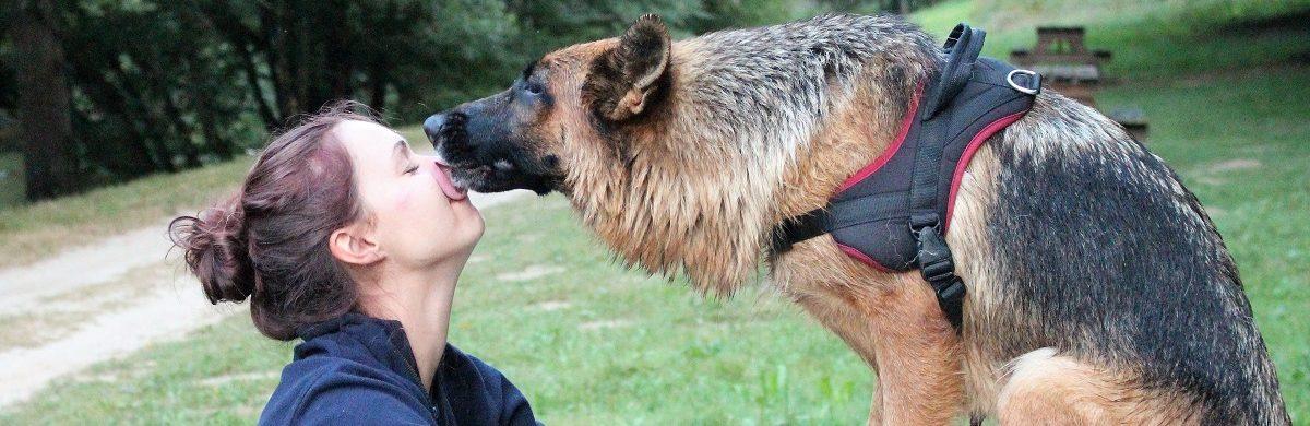 Le relationnel humain/chien : une affaire de V.i.S.A.G.E