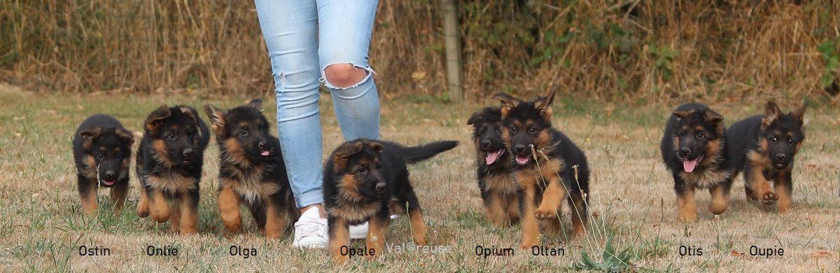 Les bébés de Letna et Hakan
