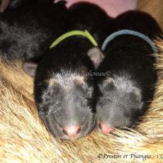 Les bébés d'Hoxana et Matcho