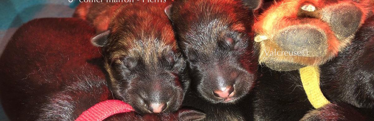 Les bébés de Lovana et Merlin